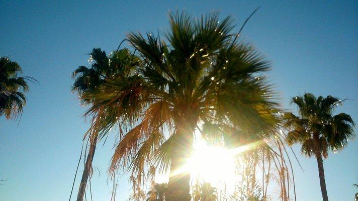 Helleaalto Gran Canarialla