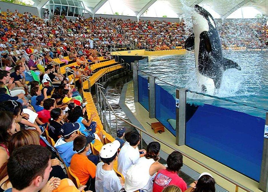Loro Parque on yksi Teneriffan suosituimpia vierailukohteita, jossa voit nähdä muun muassa delfiinejä, merileijonia, miekkavalaita, satoja lintuja, gorilloja jne.