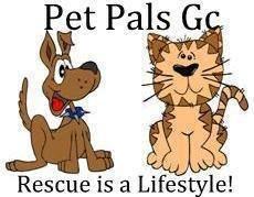 Ostovinkkejä - Pet Pals GC -myymäläntuotoilla autetaan eläimiä Gran Canaria