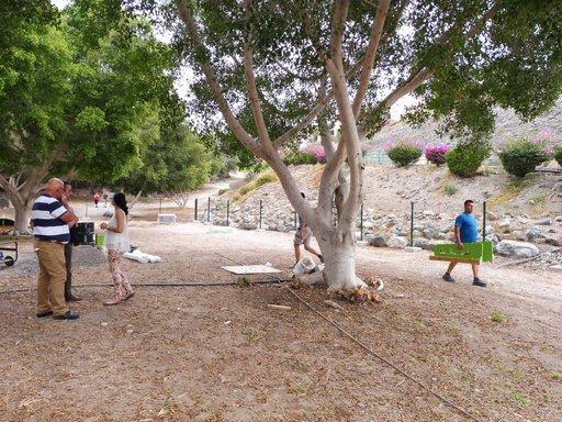 Koirat- Sonnenlandin koirapuisto Gran Canaria