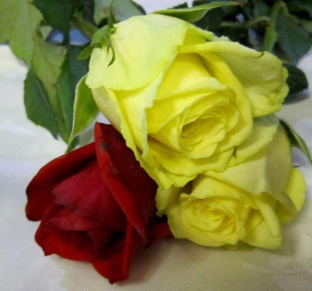 Feliz dia de la madre - Hyvää äitienpäivää Kanarialta!