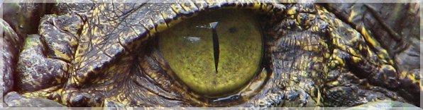 Nähtävyydet - Krokotiilipuisto