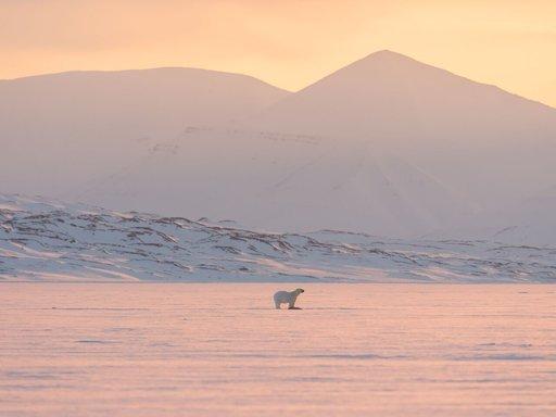 Arktista elämää.