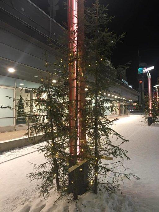Tällaiset risukuuset koristivat viime joulun alla Rovaniemen joulukatua ennen viikonloppua, jona Janne Honkanen joukkoineen toi paikalle uudet, tuuheammat kuuset (kuva ylhäällä).