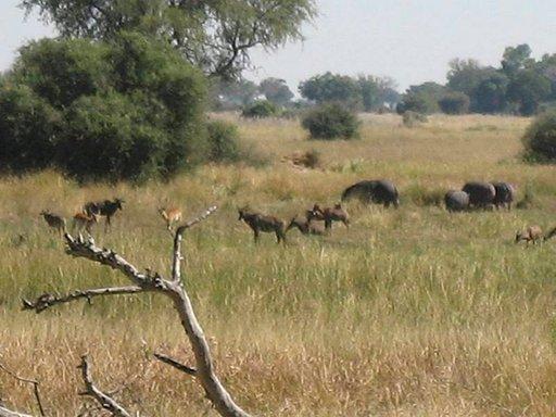 Kwara Campin maisemaa koristavat impalat ja virtahevot.