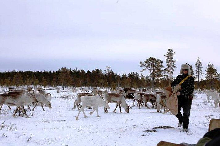 Poromiehen vuosi tietää<br /> huolenpitoa porokarjasta Helsinki