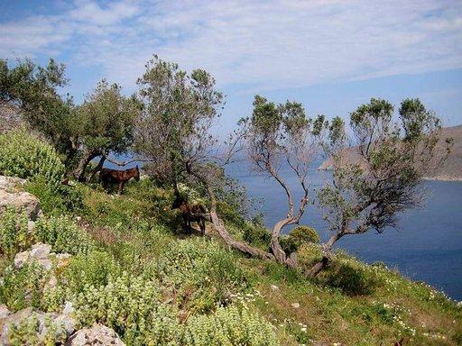 Yrttien, kukkien, puiden ja meren tuoksu on huumaava Amorgoksen kevättuulessa.