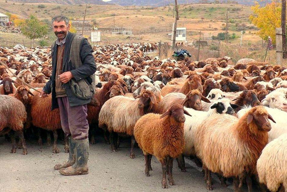 Armenian elinkeinoja ovat muun muassa tietotekniikka ja jalokivien prosessointi. Matkailu on vahvassa nousussa. Osa kansasta elää köyhyydessä, yrittäen hankkia elantonsa maataloudesta.