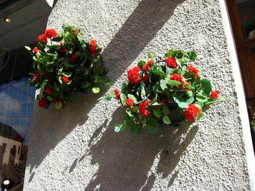 Visby on kukkasten kaupunki.