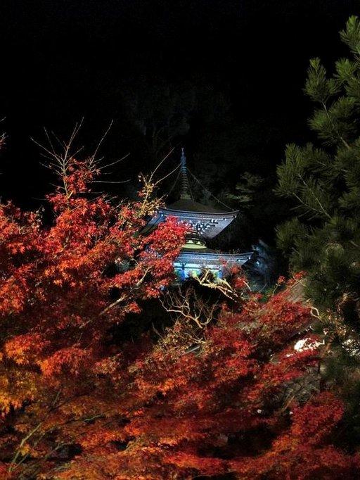 Kioton temppelit ja pyhäköt ovat näyttävimmillään syksyn väriloistossa.