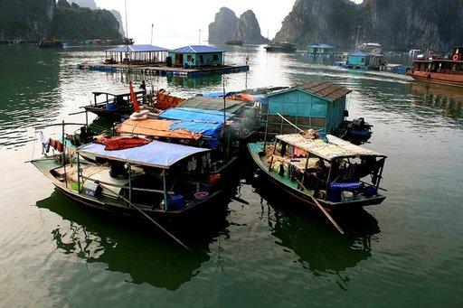 Alukset ovat vanhoja värikäspurjeisia puulaivoja, joilla matkailijoita kuljetetaan Halong Bayn terävien kalliomuodostelmien välissä.