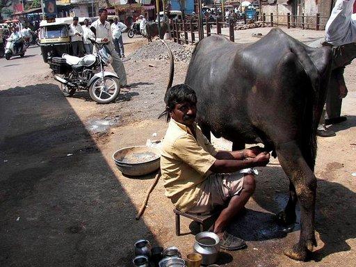 Vasta lypsettyä buffalon maitoa myytiin torilla.