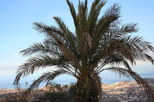 Bandaman näköalapaikalta näkee Las Palmasin kaupunkiin.