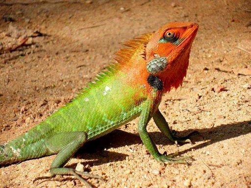 Sri Lankan luonnossa näkee monenväristä elämää.