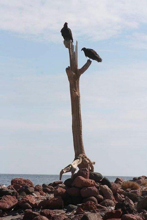 Saaren ainoa puu on ilmeisesti saapunut paikalle kellumalla.