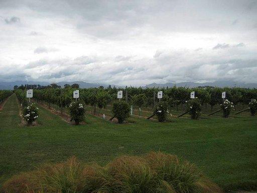 Viinitila Marlboroughin alueella.