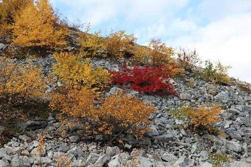 Pyhän kivikot, punaiset ja keltaiset lehdet ja jazz ovat sopineet yhteen jo yli kaksikymmentä vuotta.