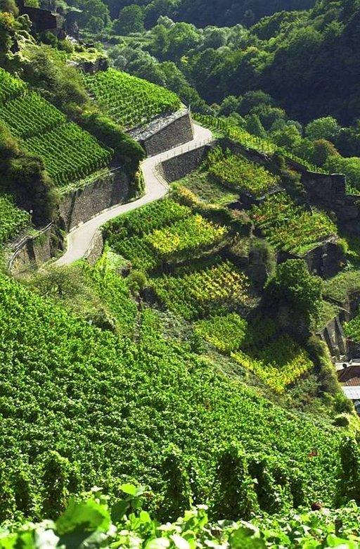 Ahr-joen laaksossa voi vaellella viiniköynnösten peittämillä rinteillä.