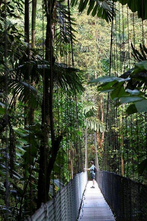 Kävelyretkellä pääsee korkealle, missä apinat ja linnut liikkuvat.