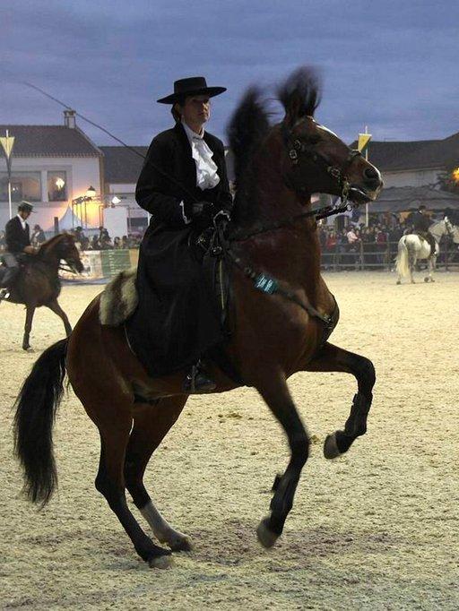 Golegassa vuosittain järjestettävä hevosfestivaali rakentuu maan kansallisrodun, lusitano-hevosen ympärille.