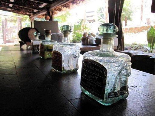 Jos jokin on varmaa, niin se, että tequilaa tarjoillaan jopa viidakossa!