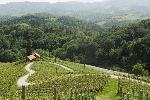 Viininviljely on Sloveniassa tärkeä elinkeino.