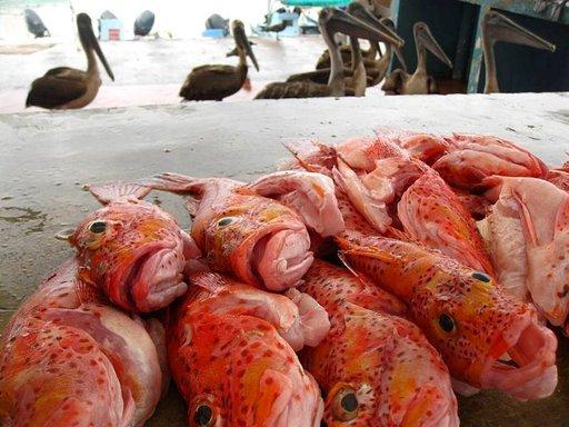 Kalaa tahtoisivat syödä muutkin kuin matkailijat.