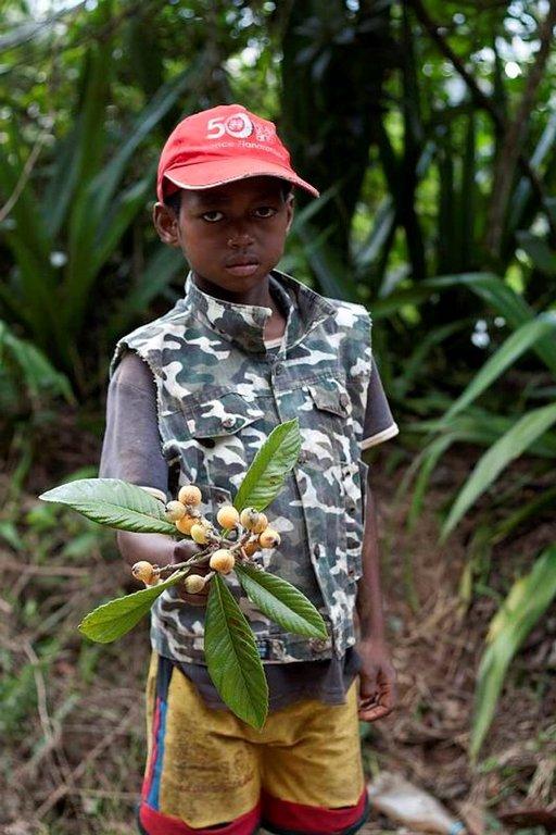 Luonnossa kasvaa paljon villihedelmiä, joista voi nauttia kuka tahansa. Fianarantsoalainen poika haki puusta tuntemattomaksi jääneitä makeankirpeitä marjoja.