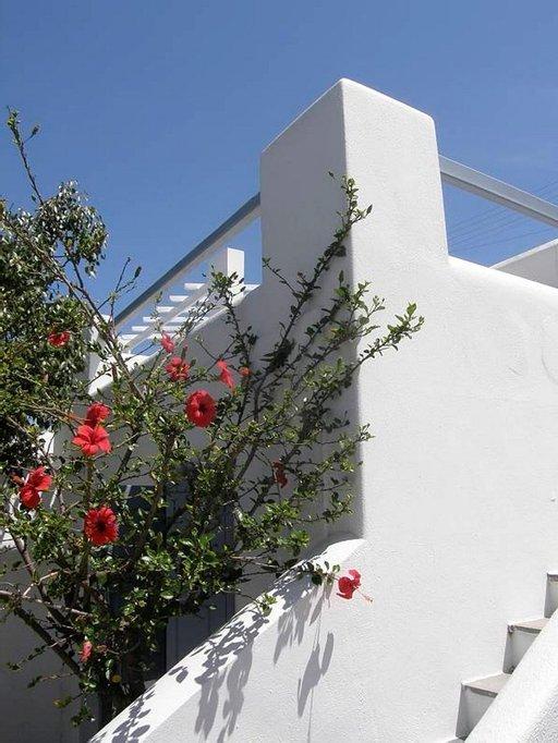 Mykonoksen saarella voi ihastella valkoisiksi rapattujen laatikkotalojen arkkitehtuuria.