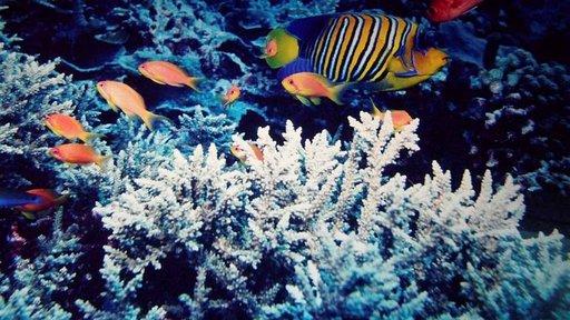 Churaumin akvaariossa voi ihailla koralleja ja kaloja.