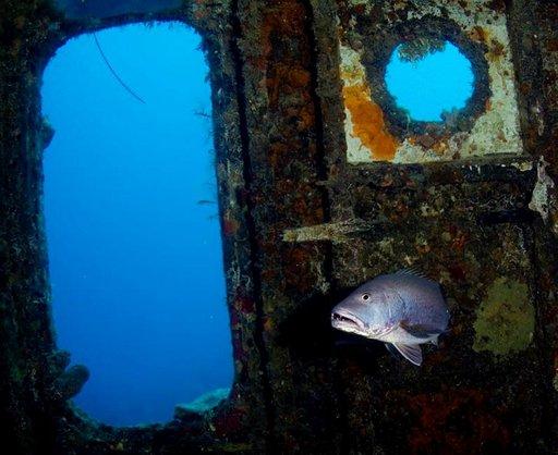 Halliburtonin hylky on suosittu sukelluskohde, jonka ovat löytäneet monet merenelävät.