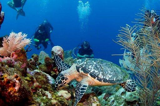 Kuvaaminen pinnan alla on suosittu harrastus, ja kilpikonnat ovat loistavia malleja.