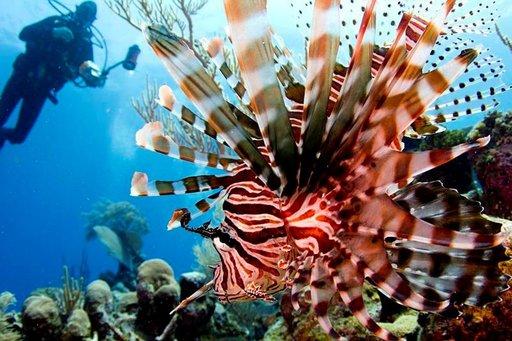 Karibian lämpimissä vesissä oleilevat lukemattomat trooppiset kalalajit.