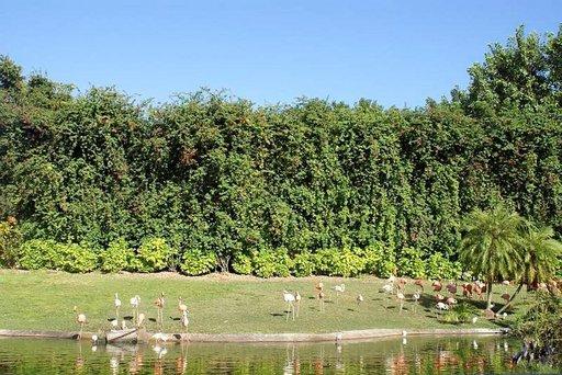 Everglades on myös lintuparatiisi. Nimensä veroinen Flamingon vierailukeskus.