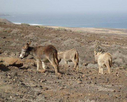 Jandian luonnonpuiston villiaasit löytävät toimeentulonsa äärimmäisen karusta maastosta.