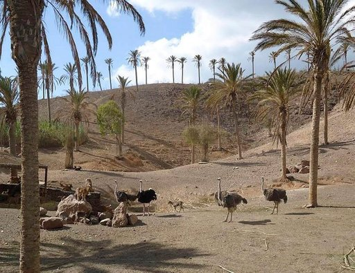 Oasis Parkissa tutustutaan Afrikan savannin eläimiin istutettujen palmujen katveessa.