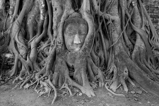 Wat Maha That -temppelin kuuluisin nähtävyys on puunjuurien syleilemä, yksinäinen Buddha-patsaan pää.