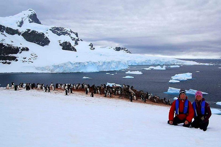 Ihmisiä nähdessään pingviinit pysähtyivät hetkeksi paikalleen, mutta jatkoivat pian taas pesimis- ja hautomispuuhiaan.