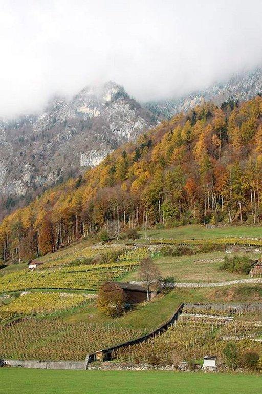 Sveitsin rinteillä kasvava viini on raikasta ja arvostettua.