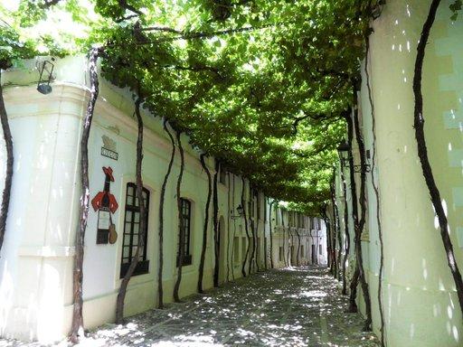 Viiniköynnökset koristavat bodegan pihaa.