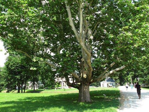 Vuosisatojen ikäiset puut antavat kesällä miellyttävää varjoa.