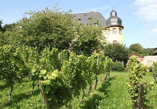 Vollrads-linna sijatise riesling-viljelysten keskellä