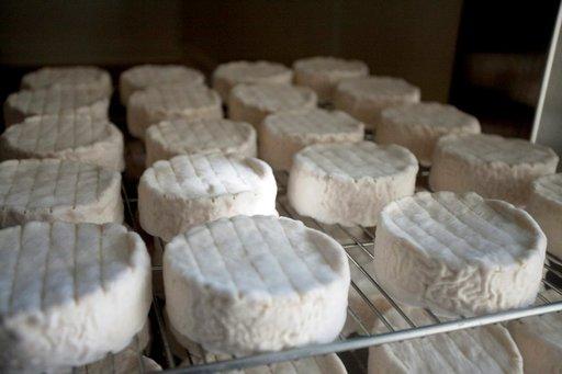 Viikon kypsyneitä juustoja kylmiössä odottamassa pakkaamista puisiin rasioihin.
