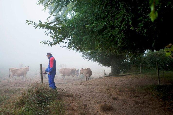 Lehmänlantaa ja<br /> juustonhajua BRETAGNESSA