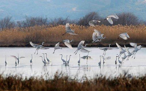 Navarinolahden läheisyydessä Gialovassa sijaitsee suuri vesialue, jossa on 270 eri lintulajin joukossa lamingoja.
