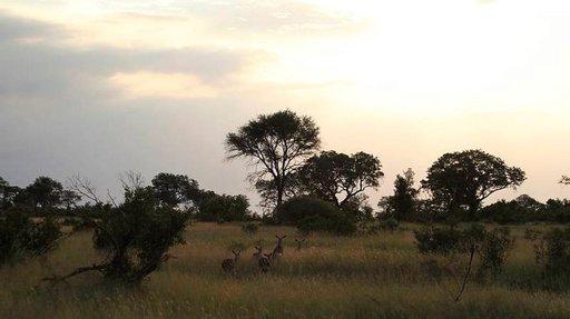 Rakastu villiin luontoon<br /> SABI SABI<br /> Safarien ylellinen helmi