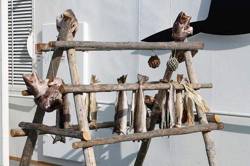 Norjalaista turskaa kuivatetaan myös laivan kannella.