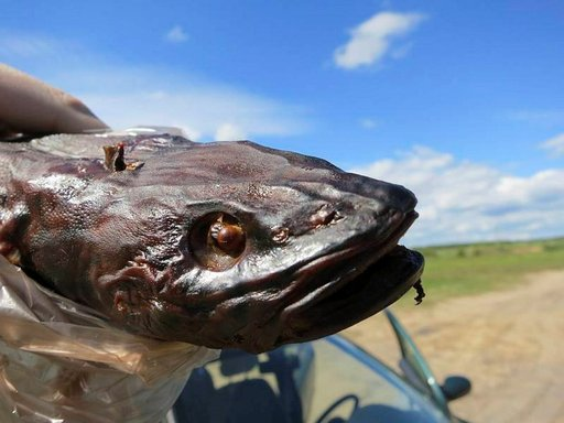 Peipsi-järven rannalla kannattaa maistaa savukalaa, jota voi ostaa tien varren kojusta.