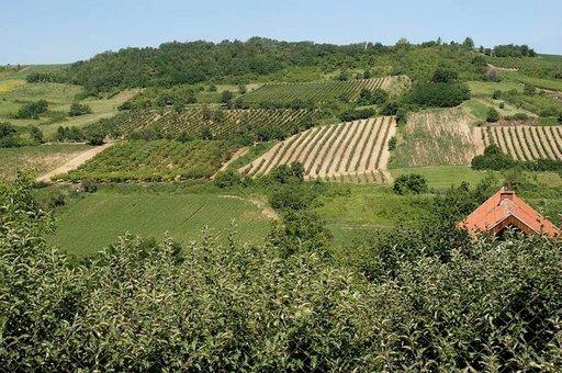 Vojvodinan maakunta on Serbian viljavinta aluetta.
