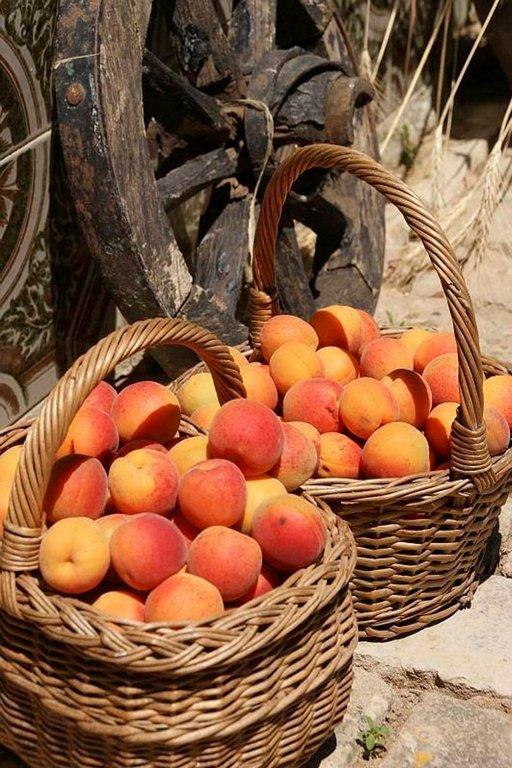 Fruška Goran hedelmällisillä rinteillä kasvaa mehukkaita aprikooseja.